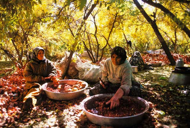Women Pounding Pomegranates into Pulp for Syrup
