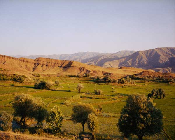 Agricultural Fields in Iran's Elburz Mountains
