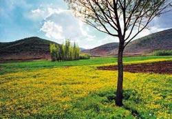 Plant Coverings, Kohkiluyeh Va Boyer Ahmad