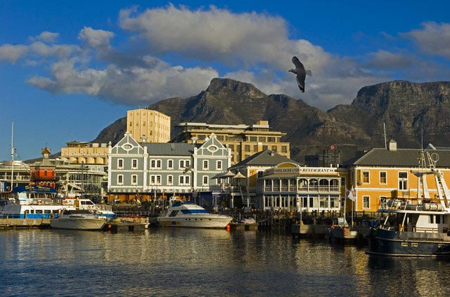 Gull Flying Over Cape Town Waterfront