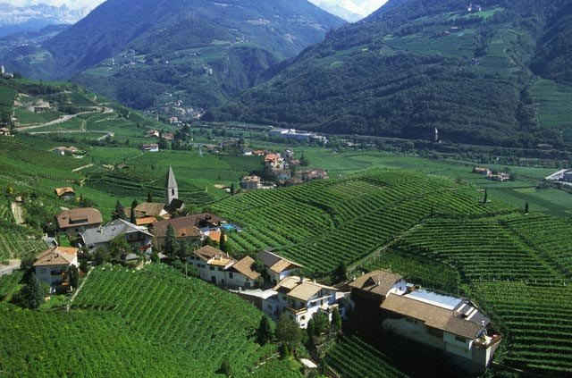 Vineyards Around Bolzano in Italy
