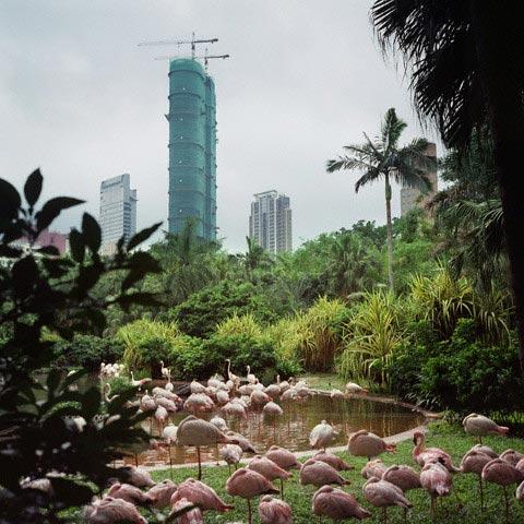 Flamingos at the Kowloon Park