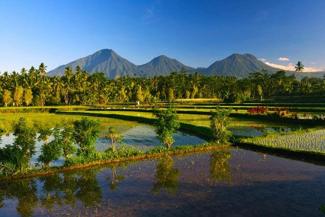 Paddy fields & volcanos at Sidemen, Bali, Ind
