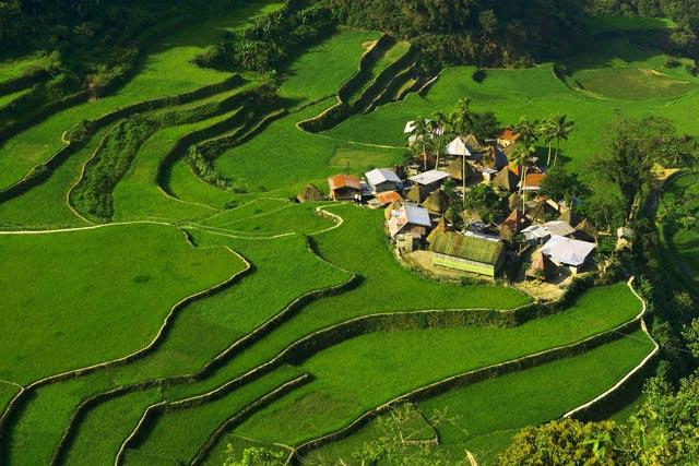 Rice terraces of Bangaan at Banaue, Luzon Isl