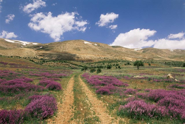 Lavender and spring flowers on the road from