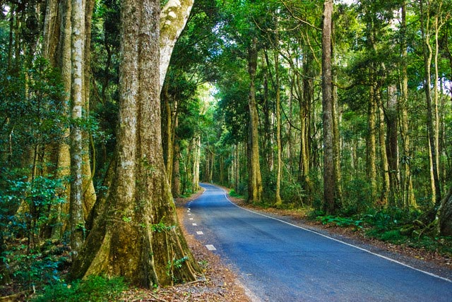 Road through Lamington National Park