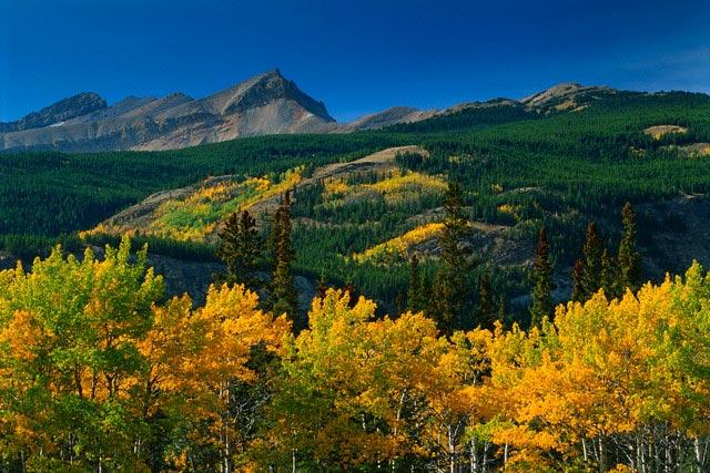 Autumn Along the David Thompson Highway