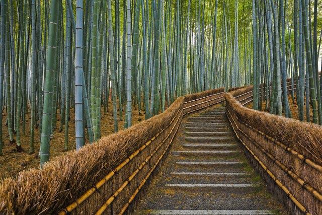 Bamboo Lined Path at Adashino Nembutsu-ji Tem
