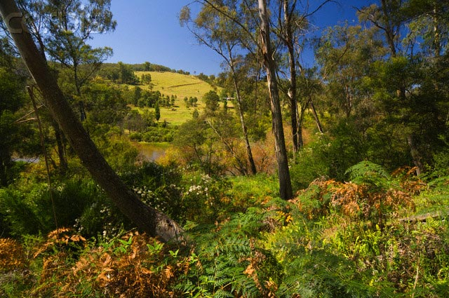 Bushland, Snowy River National Park, Victoria