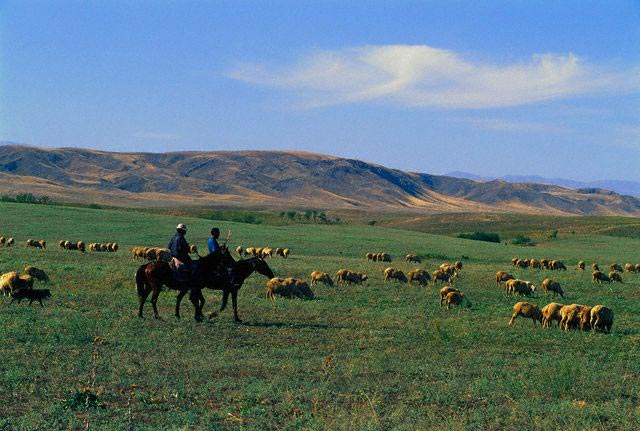 Kazak Herdsmen and Sheep