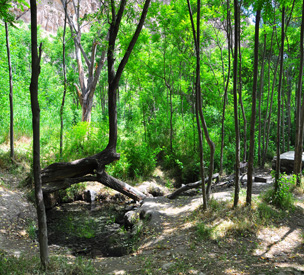 عکس اول پارک ملی تندوره