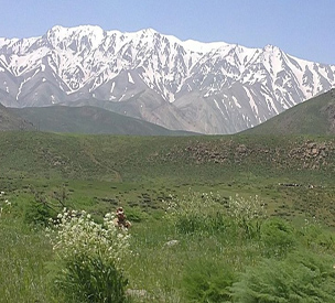 اطلاعات گردشگری قالی کوه