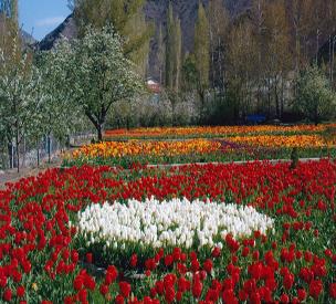 باغ لالههای گچسر