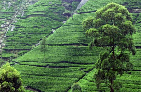 اطلاعات توریستی سریلانکا