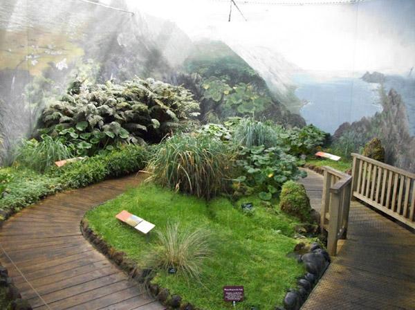 Antarctic Garden