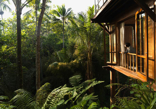 Tropical Jungle Dwelling